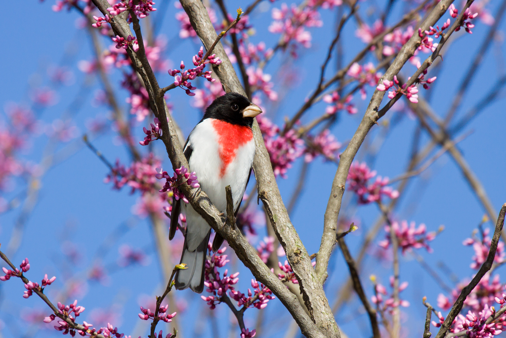 How You Can Help Save the Birds